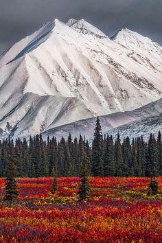 Alaska winter and fall at Denali National Park Alaska Winter, Beautiful World, Beautiful Places, Landscape Photography, Nature Photography, Photos Voyages, Alaska Travel, Parcs, Amazing Nature
