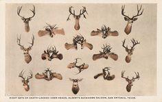 Death-locked deer heads, Albert's Buckhorn Saloon, San Antonio, Texas