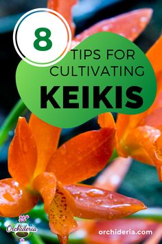 Top 8 Questions & Answers about Orchid Keikis An orchid keiki is a baby replica of the mother plant, Orchid Propagation, Baby Orchid, Indoor Orchids, Tropical House Plants, Build A Greenhouse, Mother Plant, How To Attract Hummingbirds, Orchid Care, Grow Your Own Food