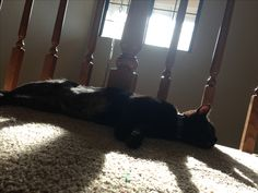 #kitty #cat #black
