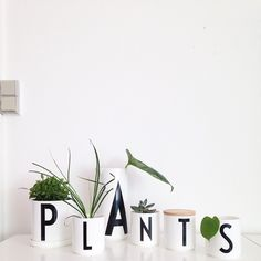 Our cups, jars and plant pot are perfect for small plants in your home.