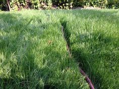 Ups, das Gras wächst schneller nach als gedacht! Wo ist denn der Rasensprenger...