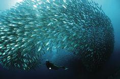 Fish Bowl. Copyright: Tourism Corporation Bonaire.