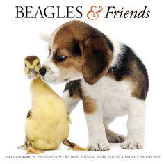 Beagles & Friends