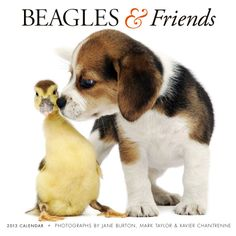 Beagles & Friends