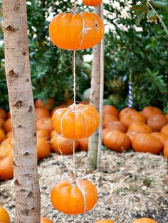 Come see what pumpkins looks like! Fall at the Dallas Arboretum is a magical sight and full of amazing pumpkin displays! Fall Home Decor, Autumn Home, Pumpkin Decorating, Porch Decorating, Halloween Projects, Halloween Ideas, Pumpkin Display, Dallas Arboretum, Diy Ideas