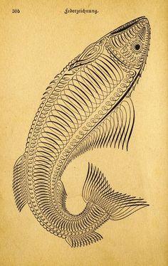 lovely script illustration from German book. (Der Geschäftsführer by J.L Nichols, 1892)