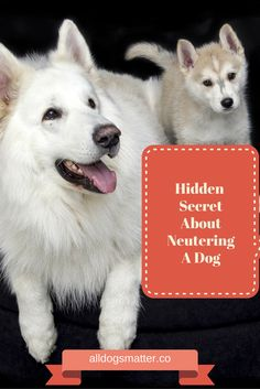 Did You Know Hidden Secret About Neutering a dog? - Just for Die Hard Dog Lovers