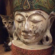 猫と仏陀 cats budda