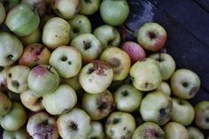 Äppelmos   Děvče u plotny Apple, Fruit, Food, Apple Fruit, Essen, Meals, Yemek, Apples, Eten