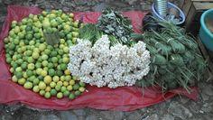 Puesto de limones y cebollines en el marcado de San Cristóbal de las casas