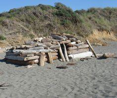 Walk On Beach Driftwood