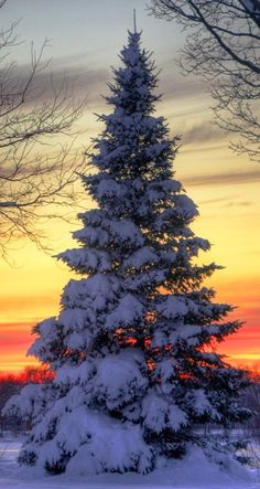 Winter Sunset ~ Dreamy Nature