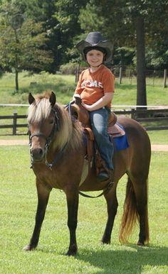 Kid Safe Bombproof Pony Mare for sale in Tuscaloosa, Alabama :: HorseClicks