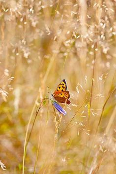 The Meadow ~