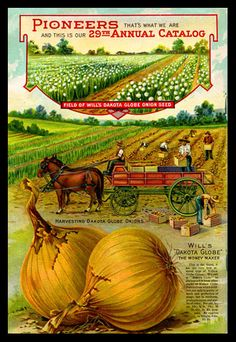 1912 Will's Seed Company Catalog Back Cover, featuring Dakota Globe Onions.