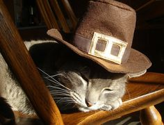 sleeping pilgrim resting up for autumn harvest