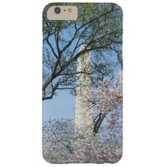 Cherry Blossoms and