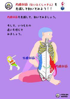 内腹斜筋(ないふくしゃきん)まとめ ヨガ解剖学   世界一ゆる〜い解剖学教室