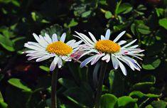 Interlacement by Warquis on DeviantArt Deviantart, Plants, Plant, Planets