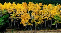 El Blog de Marcelo: 15 Nuevos paisajes del otoño: ¡Maravillas de la naturaleza!