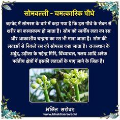 Ayurvedic Plants, Ayurvedic Healing, Ayurvedic Remedies, Ayurveda, Natural Health Tips, Health And Beauty Tips, Health And Wellness, Health Care, Home Health Remedies