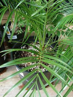 NASA's list of the best air-filtering houseplants. Gerbera Jamesonii, Nasa, Ficus, Air Filtering Plants, Best Air Filter, Plant Needs, Edible Garden, Houseplants, Indoor Plants