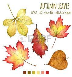 dibujos de hojas de otoño: las hojas de otoño de un color de agua sobre un fondo blanco                                                                                                                                                                                 Más