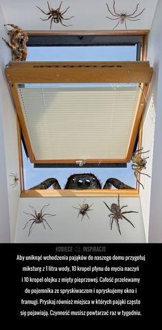 Jak skutecznie przegonić pająki z domu?