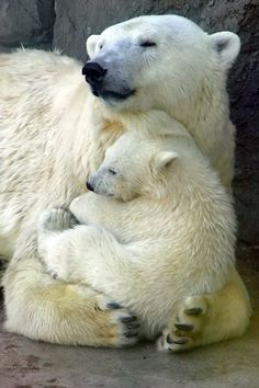 Cuddling momma & baby polar bears