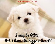 I MAY BE LITTLE BUT I HAVE THE BIGGEST HEART!!!
