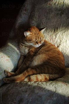 Like A Cat, Get Outside, Bathing, Sunshine, Handsome, Sofa, Stock Photos, Cats, Animals