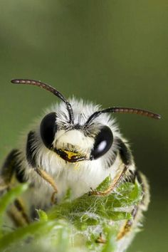 Bees Photograph - Cute Bee by Andre Goncalves Beautiful Creatures, Animals Beautiful, Cute Animals, Mason Bees, I Love Bees, Bees And Wasps, Beautiful Bugs, Cute Bee, Bee Art