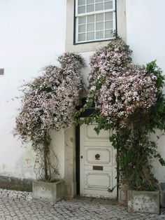 Gorgeous blooms above a doorway