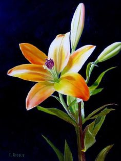 Distinctive Gifts Mean Long Lasting Recollections Lily Painting Original Oil Painting Yellow Lily Lily Painting, Painting Edges, Unusual Flowers, Beautiful Flowers, Pinturas Disney, Arte Floral, Day Lilies, Flower Art, Cactus Flower