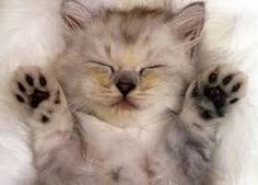 Картинки по запросу кошки фото
