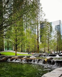 Evergreen in the city #canarywharf #water #citylife #littlestroll #trees #green #peaceful #love #life #london by xx_mayheart_xx