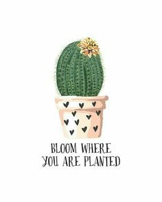 Bloom where you are planted Quote Print from PuffPaperCo on Etsy – positive Vibes – Cactus Cactus Quotes, Plants Quotes, Botanical Decor, Botanical Prints, Art Positif, Pinterest Arte, Decoration Cactus, Impressions Botaniques, Bloom Where You Are Planted