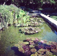 Koi Pond at San Ysidro Ranch