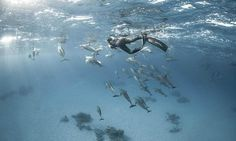 Free diver photographs his swim with a pod of 100 dolphins