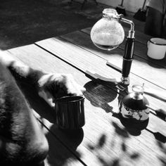 Agora podemos tomar cafés especiais todos os dias ! Nossa micro torrefação torra cafés especiais sabe aqueles que normalmente iria só para os gringos é esse mesmo ! A partir de agora pelo menos um pouquinho vai ficar aqui em SJC ! Na foto estamos tomando pelo método siphon bem legal ! #mestrecafeeiro #cafedatarde #caferia #sjc #cafesespeciais #cafe Fomos marcados nessas fotos ! obrigado !