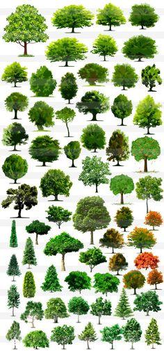 リアルな木・樹木・針葉樹・落葉樹
