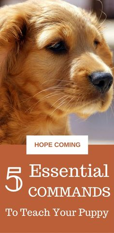 5 Essential commands to teach your puppy || Puppy Training Tips || Obedience Training || Teach sit || Teach Leave It || Teach Stay || Teach Come || hope-coming.com