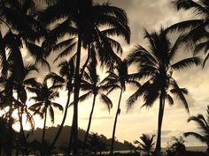 #tramonto tra le #palme