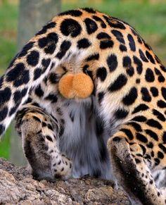 Balls of the cat