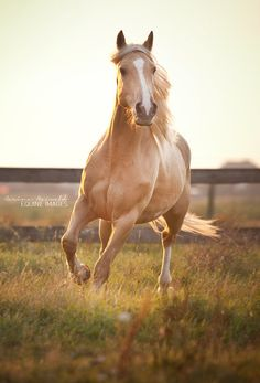 I seriously thought it was Ben before I saw his hind right leg's markings. It's a beautiful palomino!