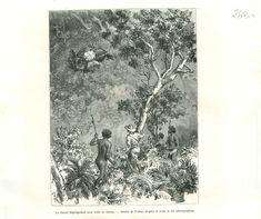 Honey Aborigène Indigenous Queensland Australia Australie GRAVURE OLD PRINT 1889 | eBay