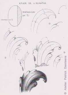 Plastika PATRICK DAMIAENS: LEAF ACANTHE   DECORATIVE důvodů   okrasné carving vzory na dřevo   V Acanthus ozdobný konstrukční