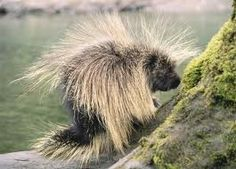 animal spines - Google Search