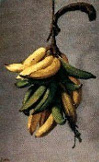 Canario: La mano de plátanos